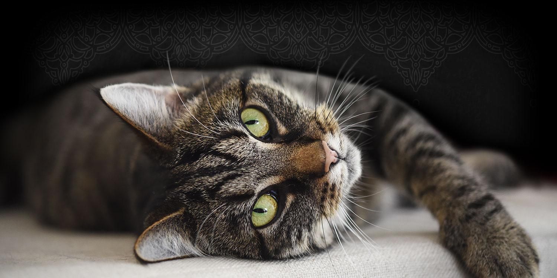 Leonardo Katzenfutter